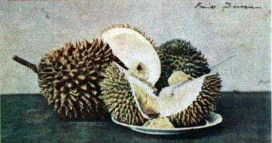 Ancient People Try Durian, the Zombie Apocalypse Inducing Fruit – Food Origins